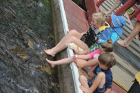Feeding the carp (and getting their toes sucked!)