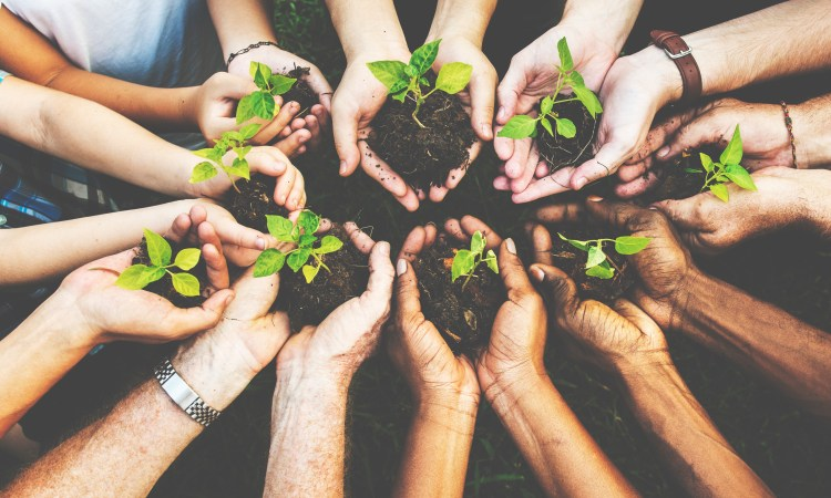 View of Therapists holding new plants in dirt in their hands