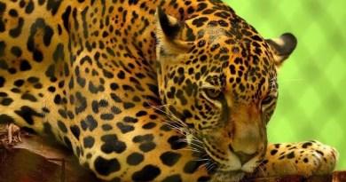 Relatório mostra falhas no combate ao tráfico de animais silvestres