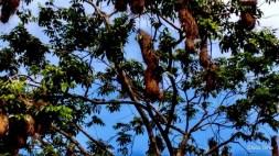 Exposição Amazônia - Chico Terra (58)