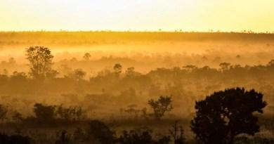 Confinamento não travou concentração de CO2 na atmosfera, diz agência