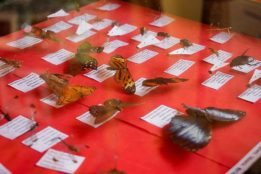 biodiversidade bioparque (11)