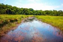 trilhas bioparque (4)