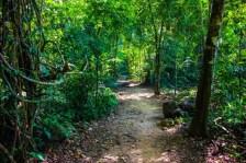 trilhas bioparque (7)