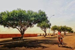 plantio árvores (7)