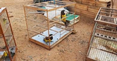 PF prende traficantes de animais silvestres naOperação Urutau 2