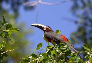 Turismo liderado por comunidades locais gera preservação ambiental