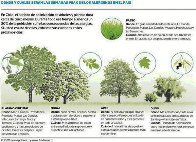 Alergias Esta Semana Comienzan Los Niveles Peak De Polen En La