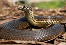 Furious Mother Unleash Snake on Her Daughter to Teach her Lessons