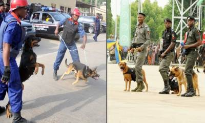 Nigerian Police, civil defence demand N317m to feed dogs, horses ahead of 2019 elections