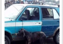 Man allegedly turns Dog and was beaten to death in Pot Harcourt (Photo)