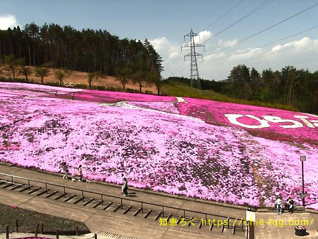 平田村芝桜