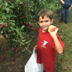 Nathan Picking Apples