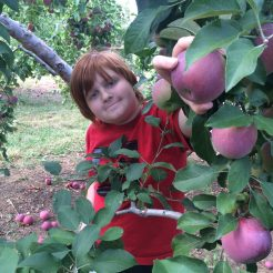 Nick Picking Apples