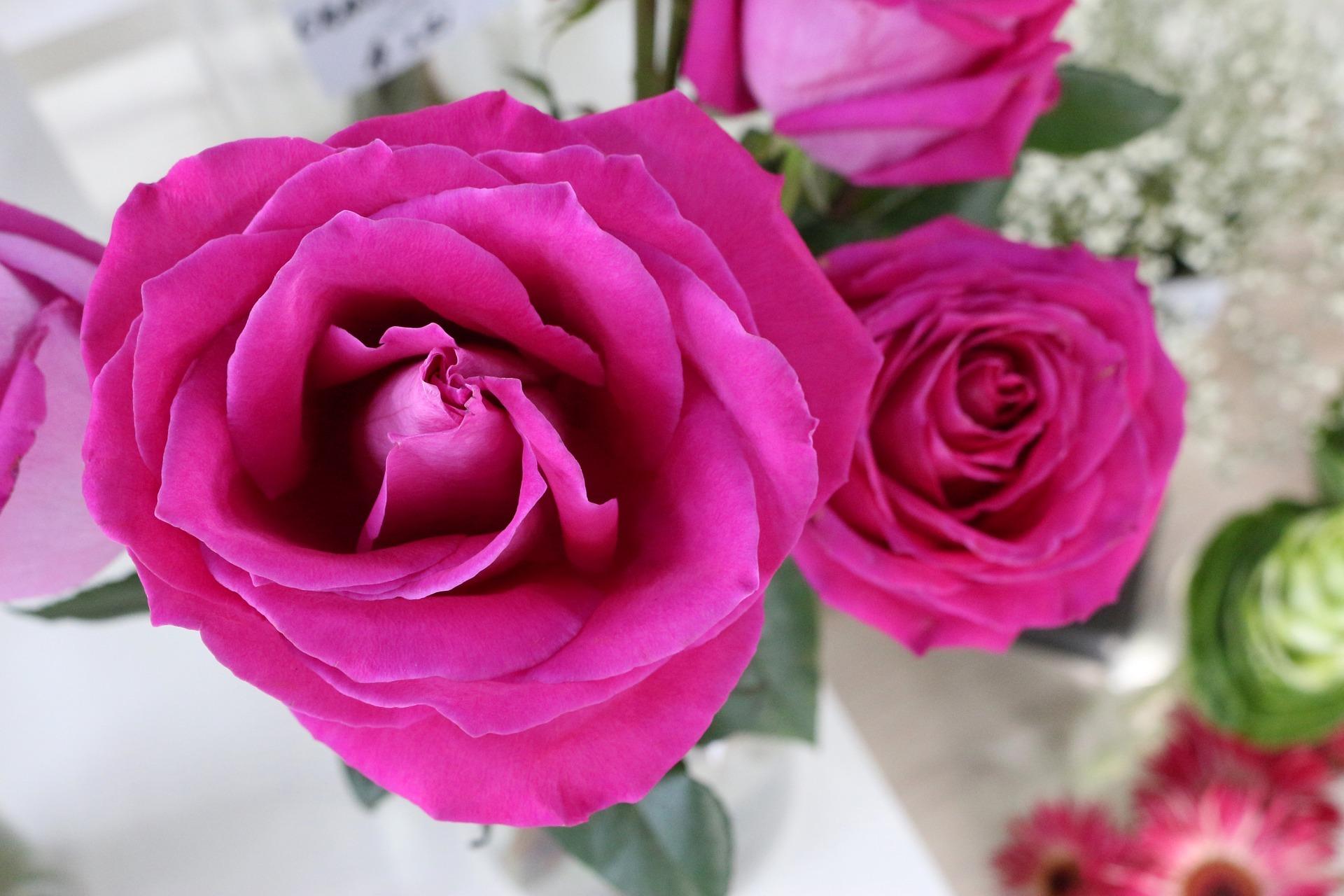 rose-3040085_1920