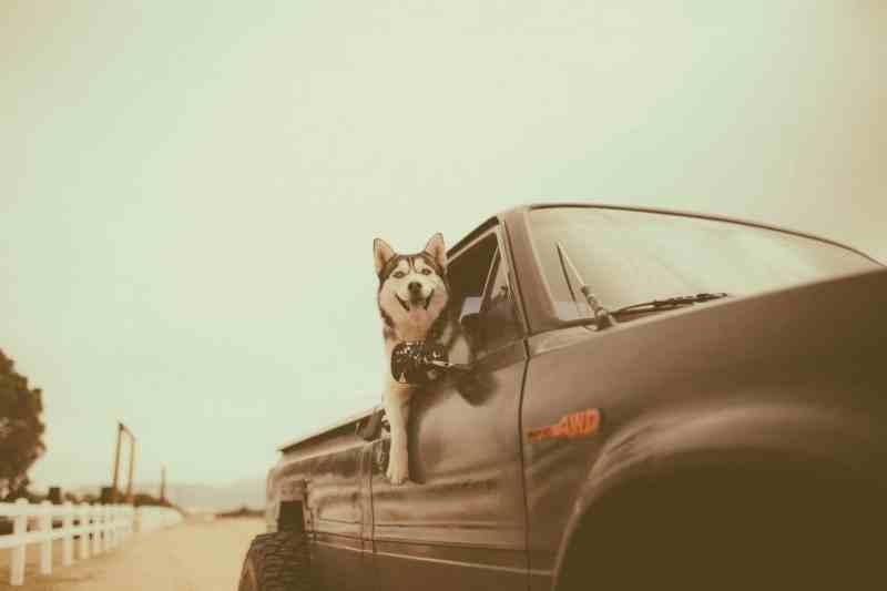 chien éducation voiture