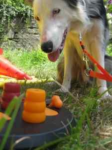 education chien coaching