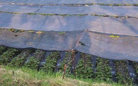実は長野はワサビの生産地。大量消費のそばにかかせません