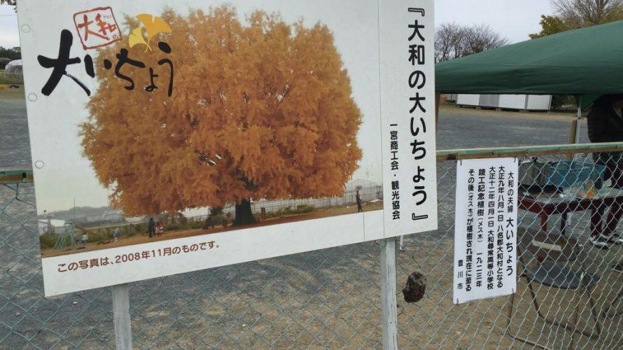 豊川市にある大和の大イチョウで怪しい物体を発見!