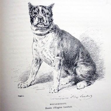 Le Bouledogue par Eugène Lambert