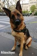 Laïka, Berger Allemand du 9ème arrondissement