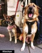 Billy et Milka, les Grigris Vietnamiens Paris 8