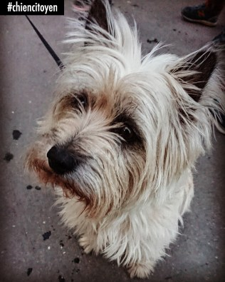 CairnTerrierParis14
