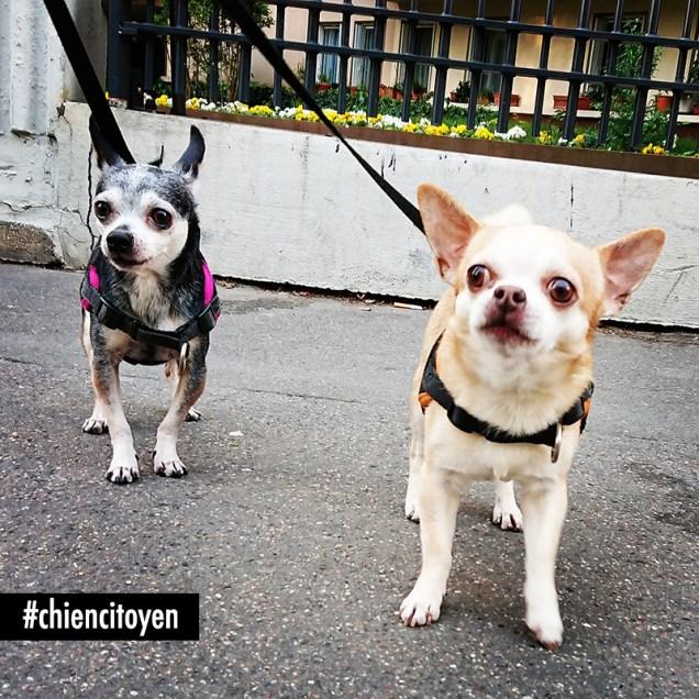 Chihuahua2Paris13