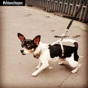 ChihuahuaParis13