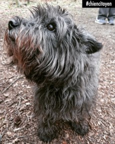 DollyCairnTerrierParis16