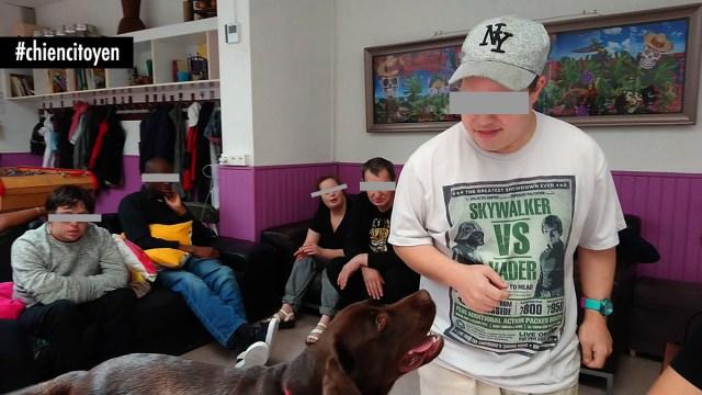 mediation canine