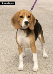 BeagleBB