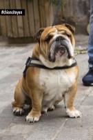 BulldogParis5red