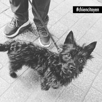 ElliotCroiseYorkshireCairnTerrierParis11