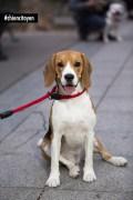 Beagle3Paris11