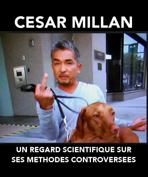 César L Homme Qui Parlait Aux Chiens : césar, homme, parlait, chiens, Regard, Scientifique, Méthodes, Controversées, Cesar, Millan, Chien, Matin
