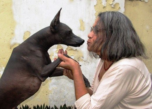 """""""… because I consider language to be part of our culture and it cannot be isolated from other cultural elements such as the Dog,"""" explains Gloria Cáceres Vargas (professor, writer and translator of Quechua) to the Association pour la protection du patrimoine péruvien (Association for the Protection of Peruvian Heritage, or APPP), in an interview at the Faculty of Social Sciences of the National University of Trujillo, in October 2017. In the picture: Luna Pelota and Gloria Cáceres Vargas - photo by Patricia Cáceres Murga (owner of Luna Pelota)."""