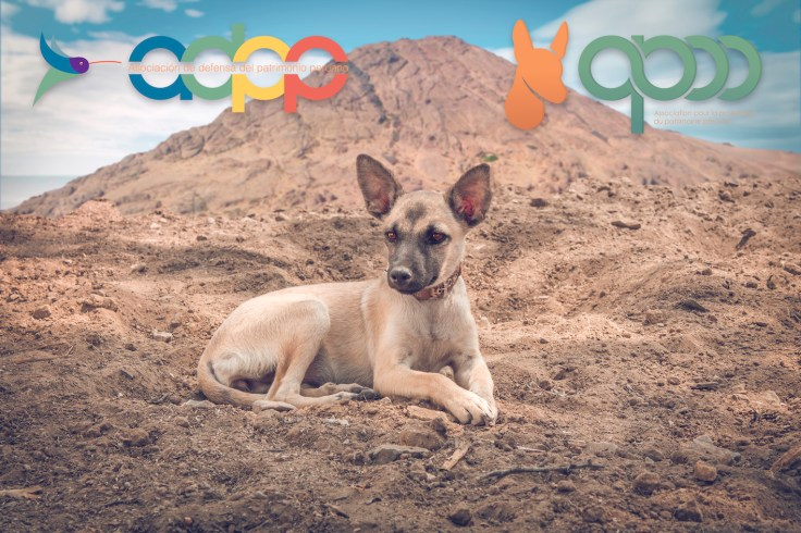"""""""Urpy""""(cachorra de raza Perro sin pelo del Perú con pelo del Museo de sitio Tucume. Photo by Favio Jordi Martínez Nuntón / appp – adpp ©2019 / Art design by Alessandro Pucci."""
