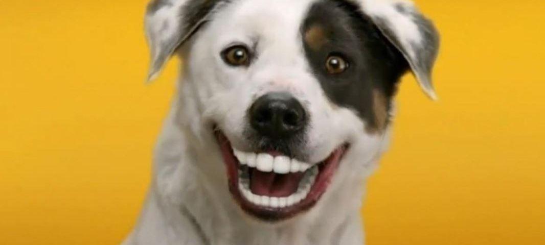 Comment prendre soin des dents de votre chien dressage - Comment couper les griffes de son chien ...