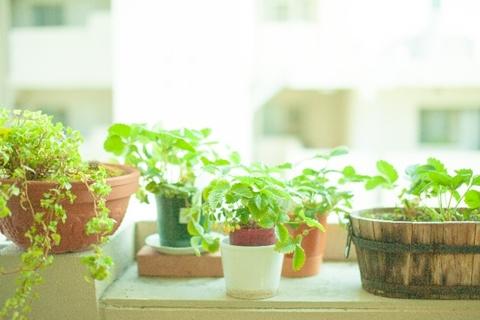 観葉植物 白い虫
