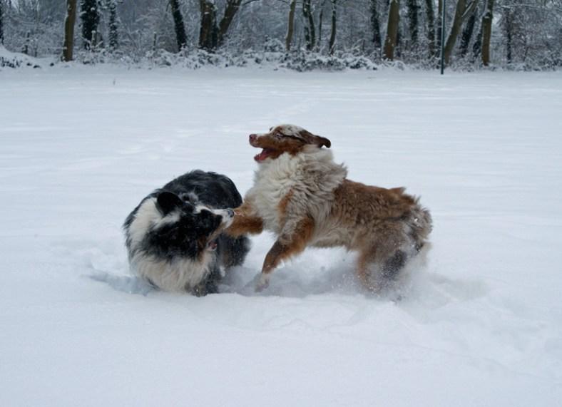 Face en Ike in de sneeuw