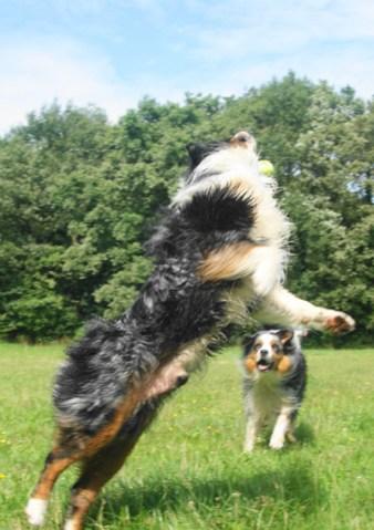 Springen naar de bal