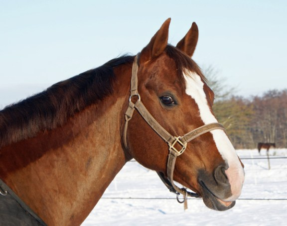 Jacqie in de sneeuw