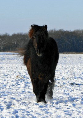Jamai in de sneeuw