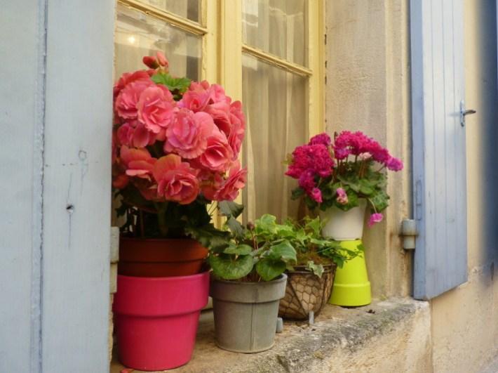 flowers-window