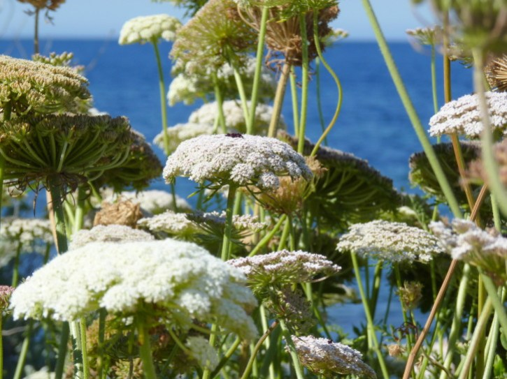 fleurs-en-bord-de-mer