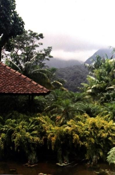 Martinique jardin botanique 2