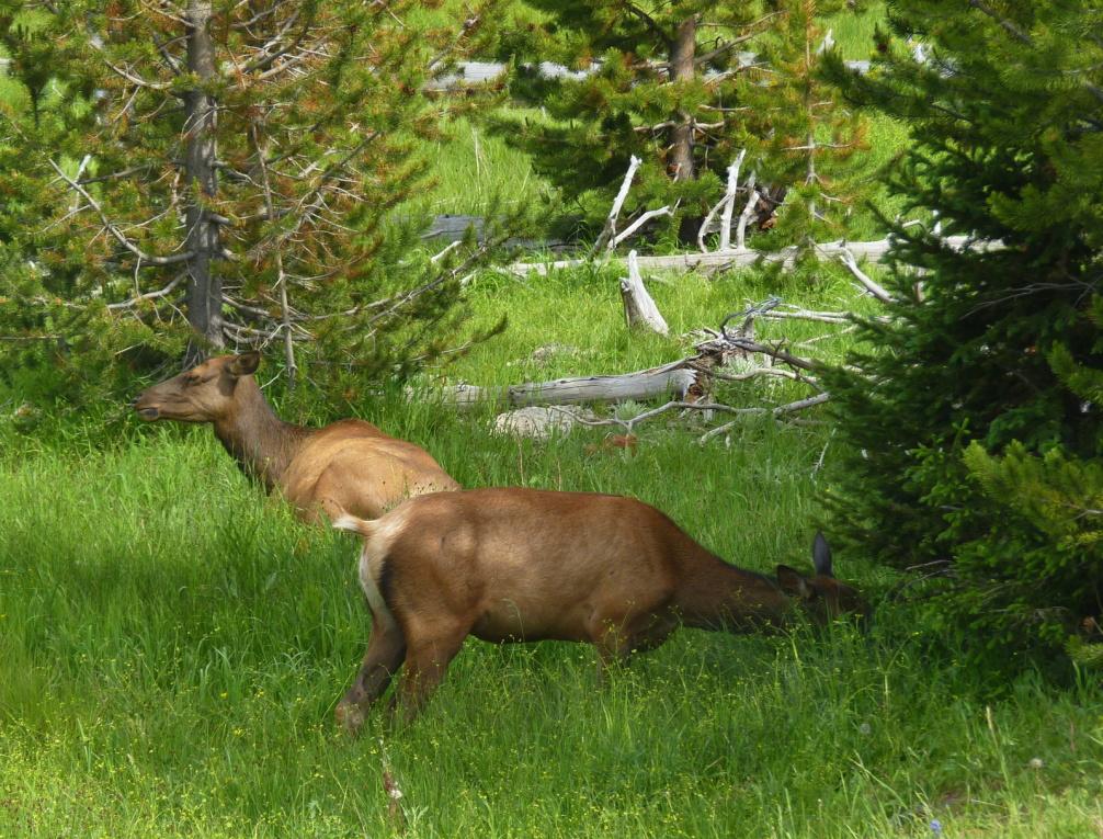 Mon voyage aux Etats-Unis #7: Yellowstone !