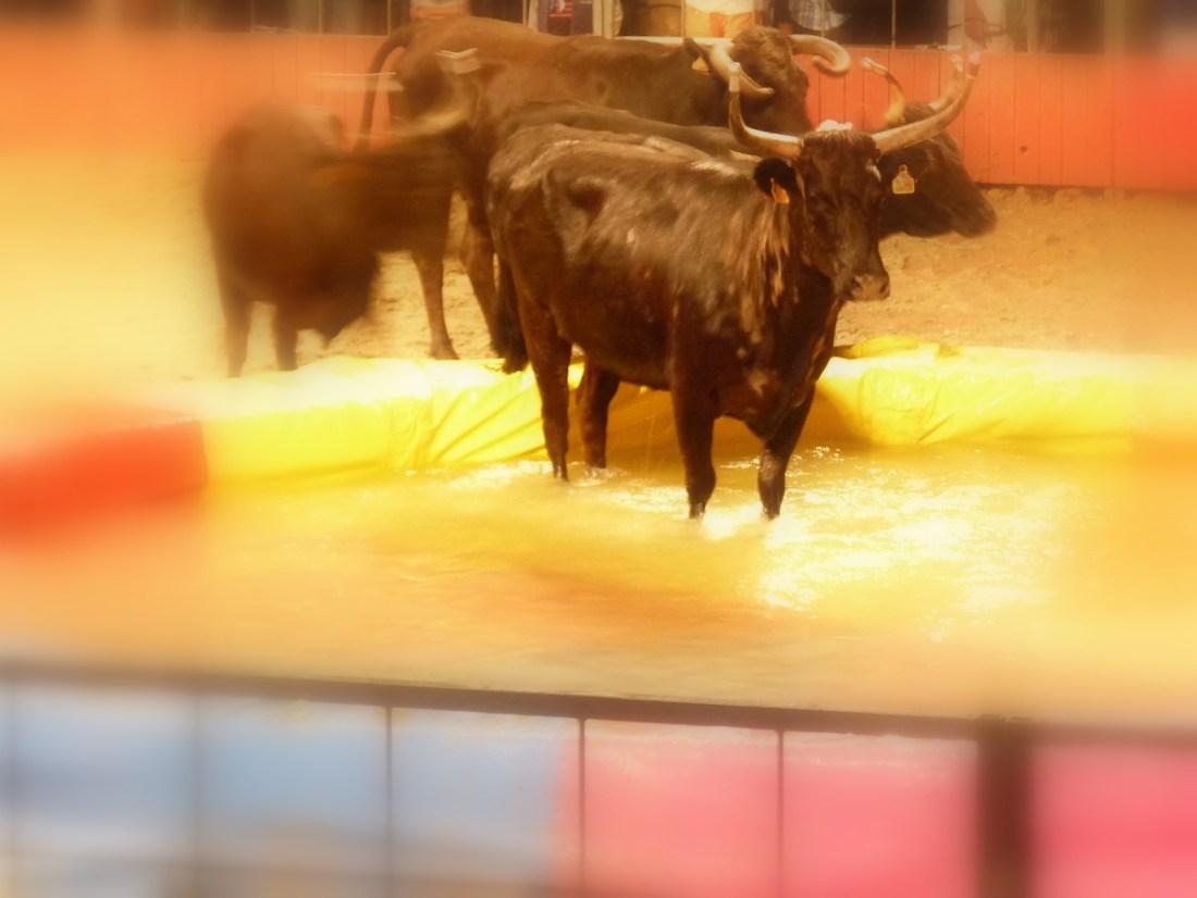 Toro piscine