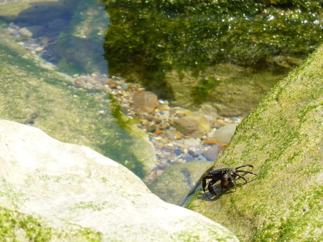 Petit crabe et chasseurs de coquillages!